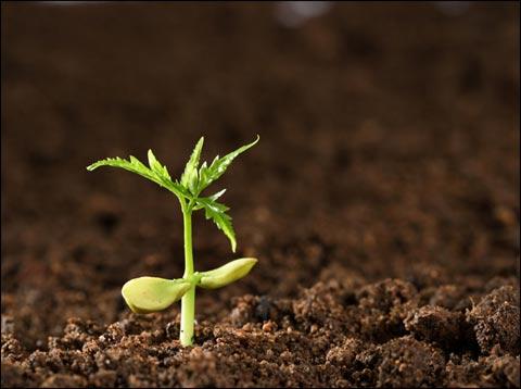 微生物菌劑如何使土壤恢复健康?